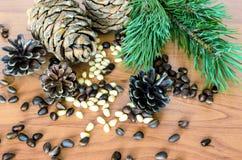 Branches, cônes et pignons Photographie stock