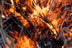 Branches on a campfire. Close up of fire flames stock image