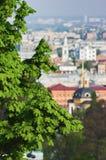 The branches of the chestnut over Kiev. Ukraine stock photo