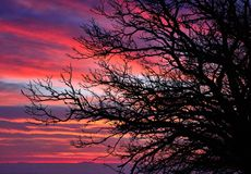 Branches of chestnut tree on colorful sky at dawn Royalty Free Stock Image