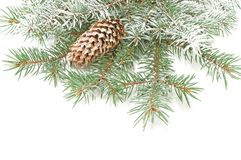 Branches of a Christmas fur-tree Stock Photography
