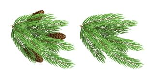 Branches of a Christmas green tree with cones isolated on white background. Festive element. Winter season. Vector. Illustration Royalty Free Stock Photos