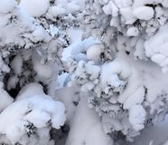 Branches of a Christmas tree covered with snow natural spruce af Royalty Free Stock Photos