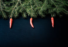 Branches of a Christmas tree decorated with chili peppers on a d Royalty Free Stock Photos