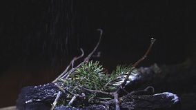 Branches of a Christmas tree with falling snow. Christmas and New Year. FHD stock video footage