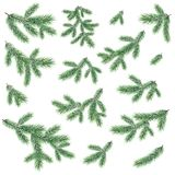 Branches of a Christmas tree. Green branches of a Christmas tree, set, isolated on white background Stock Image