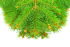 Branches of the Christmas tree, isolated on white background Stock Photos