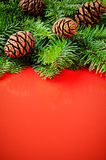 Branches of Christmas tree on red backgr Royalty Free Stock Photo