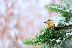 Branches of Christmas Tree with Robin Bird and Snow Royalty Free Stock Images