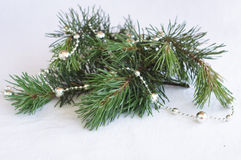 Branches of Christmas tree with silver decoration Stock Images