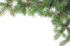 Branches of Christmas tree  white background. Branches of Christmas tree on white background Stock Photography