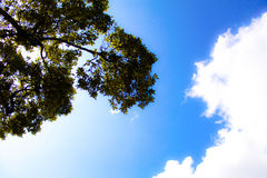 The Branches and the Cloud Royalty Free Stock Image