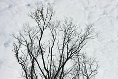 Branches and clouds. Branches against the sky in clouds Royalty Free Stock Photo