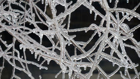 Branches coated in ice Royalty Free Stock Images