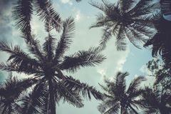 Branches of coconut palms under blue sky royalty free stock images