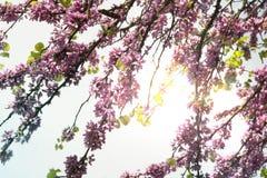 Branches colorées contre un beau ciel Photographie stock libre de droits