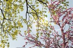 Branches colorées contre un beau ciel Images stock