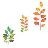 Branches colorées par automne Photo libre de droits