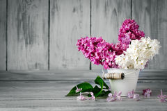 Branches are colored lilac in a basket on the background of wooden boards. Stock Image