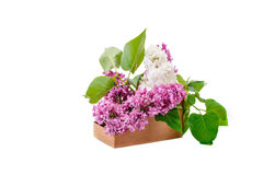 Branches are colored lilac in a cardboard basket. Royalty Free Stock Photography