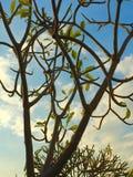 Branches compose sky Stock Photos