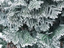 Frost on the branches of the Christmas tree stock images