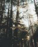 Branches, Conifers, Environment, Evergreen, Stock Photo
