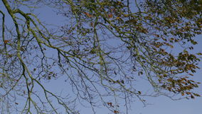 Branches contrasting against blue sky stock footage