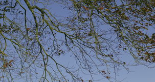 Branches contrasting against blue sky stock video