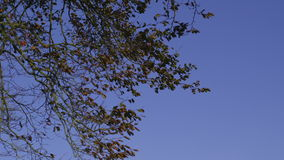 Branches contrasting against clear blue sky. In the countryside stock video