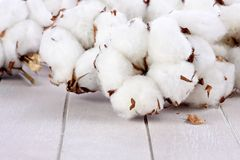 Branches of cotton balls on wood Royalty Free Stock Photo