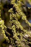 Branches couvertes dans la mousse Photos libres de droits