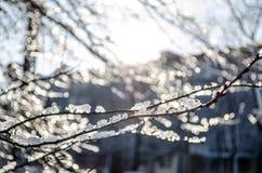 Branches couvertes de la glace au soleil Bel hiver Macro image libre de droits
