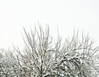 Branches couvertes de neige, Photographie stock