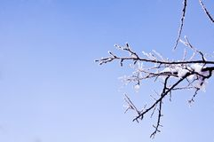 Branches couvertes de neige, Image stock