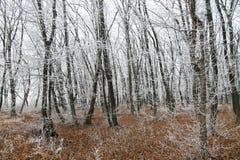 branches couvertes de neige des arbres dans la forêt d'hiver Image libre de droits