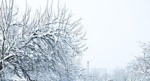 Branches couvertes de neige, hiver Photographie stock libre de droits
