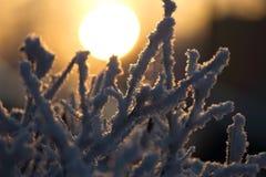 Branches couvertes par gel dans le soleil de matin, lumière chaude photo stock
