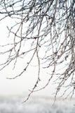 Branches couvertes par la gelée Images libres de droits