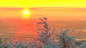 Branches covered with frost the trees sway in the background the rising sun and pink sky. stock footage