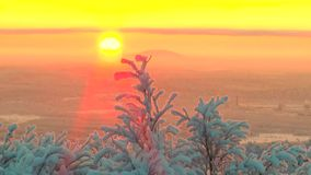 Branches covered with frost the trees sway in the background of the rising sun. Branches covered with a thick layer of snow and frost trees sway in the wind on stock footage
