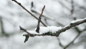 Branches frost snow. Branches covered with hoar frost shoot stock video