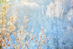 Branches covered with hoar frost Royalty Free Stock Image