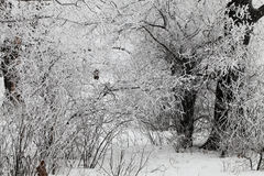 Branches covered with a hoarfrost. Branches of the trees covered with a hoarfrost Stock Photo