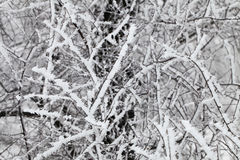 Branches covered with a hoarfrost Stock Photography