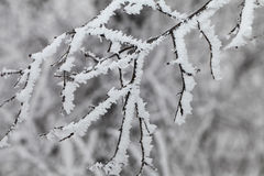 Branches covered with a hoarfrost. Branches of the trees covered with a hoarfrost Royalty Free Stock Photos