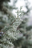 Branches covered by hoarfrost Stock Images