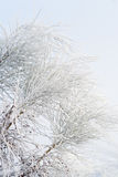 Branches covered by hoarfrost Royalty Free Stock Photo