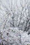 Branches covered with ice Royalty Free Stock Photo