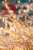 Branches covered with ice Royalty Free Stock Photography